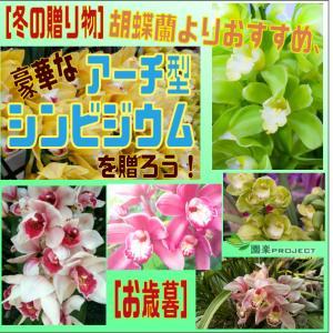 [冬の贈り物]胡蝶蘭よりおすすめ、豪華なアーチ型シンビジウムを贈ろう![お歳暮]