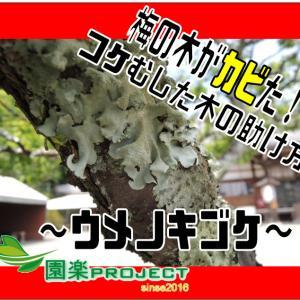 梅の木がカビた!コケむした木の助け方~ウメノキゴケ~