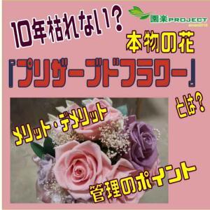 10年枯れない?本物の花『プリザーブドフラワー』とは?