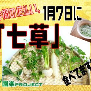 一年間の厄払い。1月7日に「七草粥」食べてますか?