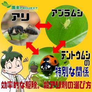 アリ・アブラムシ・テントウムシの特別な関係。効率的な駆除。殺アリ剤の選び方。