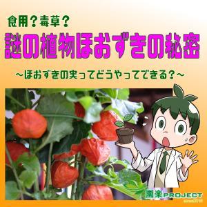 食用?毒草?謎の植物ほおずきの秘密~ほおずきの実ってどうやってできる?~