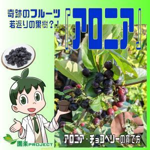 奇跡のフルーツ『アロニア』若返りの果樹?!アロニア・チョコベリーの育て方