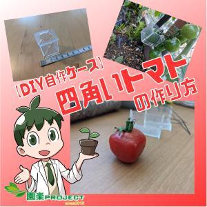 【DIY自作ケース】四角いトマトの作り方