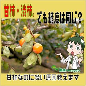 甘柿・渋柿。でも糖度は同じ?甘柿なのに渋い原因教えます