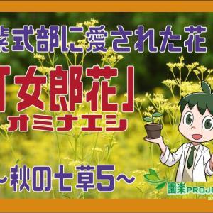 紫式部に愛された花「オミナエシ」(女郎花)~秋の七草5~