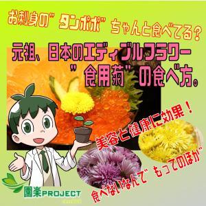 """お刺身の""""タンポポ""""ちゃんと食べてる?元祖、日本のエディブルフラワー""""食用菊""""の食べ方。美容と健康に効果!食べないなんて""""もってのほか"""""""