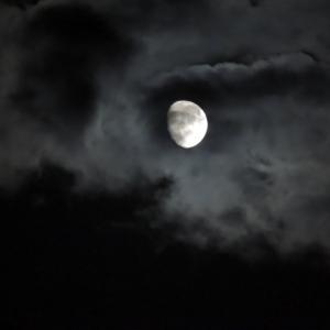 月に見とれて・・・