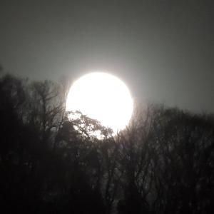 ほぼ 満月の月に見とれて・・