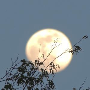 俺の桜のバックで 真っ白に輝く満月