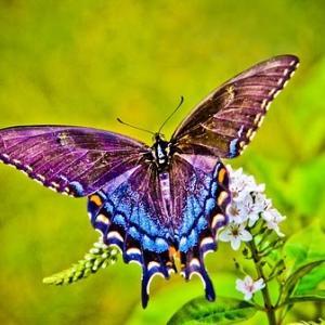いつかどこかでまた会えたら~虹色蝶々