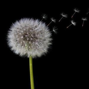 恐怖と不安の種子 ばら撒かれるエレメンタル
