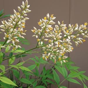 小さい花と大きい花