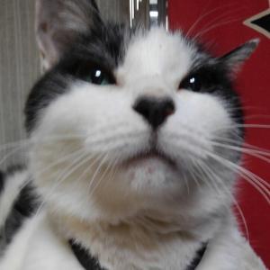 おまけの猫画像
