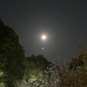 天秤座満月  4月8日11:36