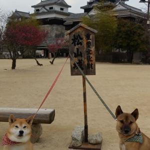 四国旅行⑥~松山城に登ったよ~
