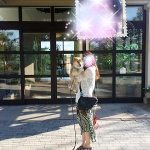 第2回犬連れ旅行①~豪華なホテル~