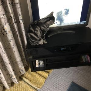 テレビを観るもんちゃん