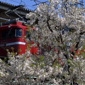 春色の沿線