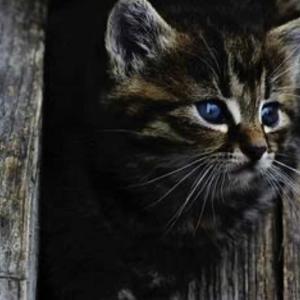 ネコの距離感に感心する