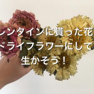 バレンタインに貰った花をドライフラワーにして生かそう!