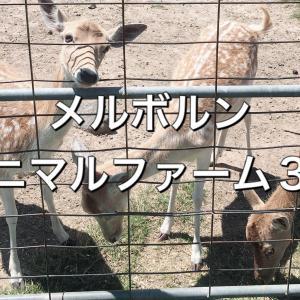 メルボルンのアニマルファーム3選【友達・家族連れ・カップルに!】