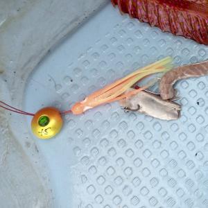 沖縄のテンヤ・カブラ釣り
