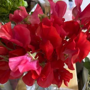 花や緑があると心豊かになる