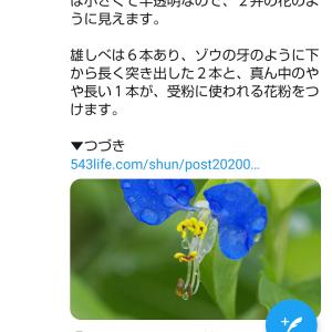 露草&ランタン&レモンケーキ
