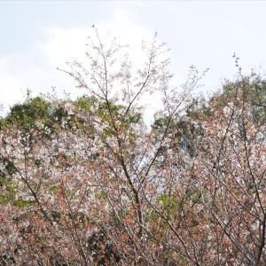 メダカ飼育と気になる春の最低気温