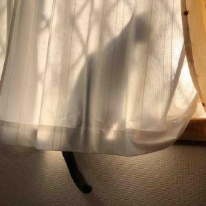 本日2/22は猫の日(=^・・^=)