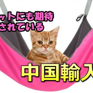 【中国輸入】にゃんこが喜ぶ商品を探すのも面白い