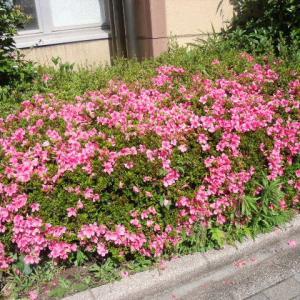 ◆イキイキふるさと街めぐり (反町・反町公園・東神奈川編) 〈5〉 ◆
