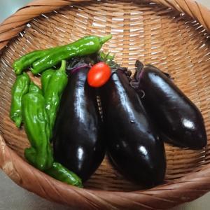 我が家で獲れた野菜
