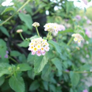 華やかな花