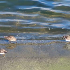 小鳥たちが涼しそうで羨ましい