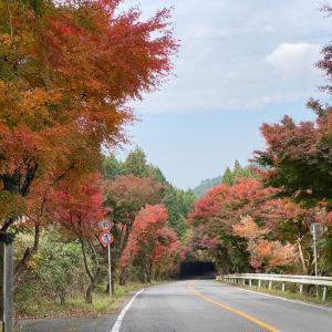 キャンプの帰り道の紅葉