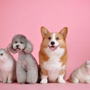 【 ペット副業 】在宅ワークで犬好きの方におすすめ【 初期費用無料 】