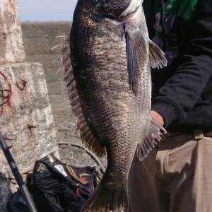 【釣行記】神奈川県 江之浦漁港でどうしても黒鯛が釣りたい!!