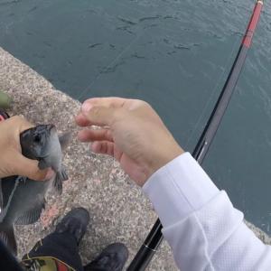 残りのコマセで向かうは江之浦港!釣果の程は・・?突如現れた魚捌き少年!?