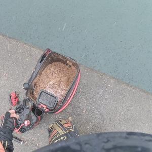 台風直後の江之浦漁港で堤防フカセ黒鯛!もう何度目の挑戦かわからない(笑)