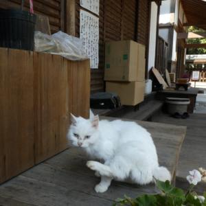 梅宮大社の梅と猫は必見!【おすすめ梅スポット】