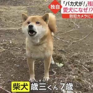 柴犬が暴行される事件…。胸が痛みます