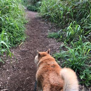 散歩コースがジャングル化
