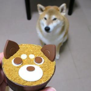 藤井聡太3冠も食べた、あの柴犬のケーキ!