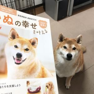 「モデル犬」はやっぱり無理!?
