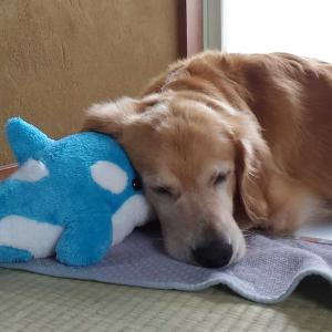 入院生活 9 愛犬ナナ