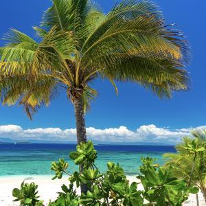 【フィジー】ビーチコンバー島への行き方【体験記】
