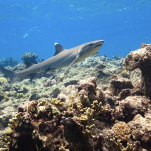 【フィジー】サメと泳げる時間の流れがゆっくりな島【クアタ島】