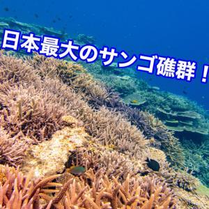 宮古島の八重干瀬(やびじ)ツアーの流れや料金を解説!【シュノーケル】